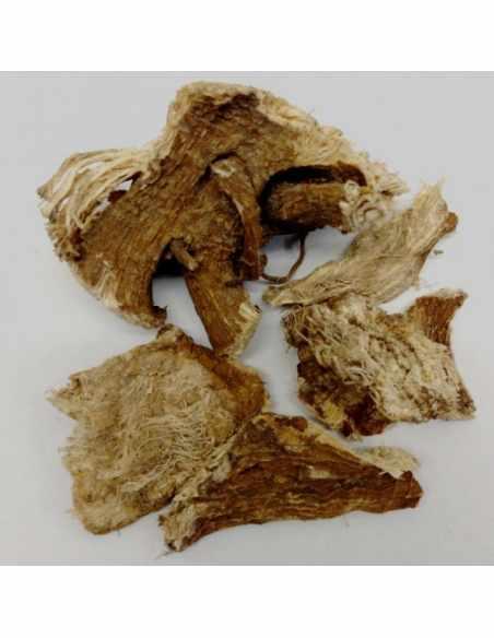 Szkarłatka ( Phytolacca ) korzeń cięty