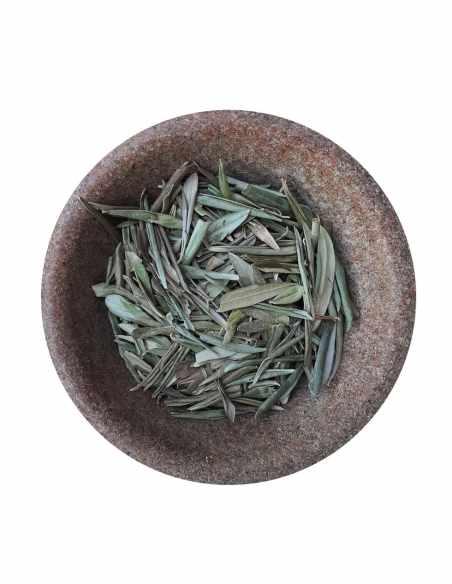 Liść oliwny ( Folium oleae )