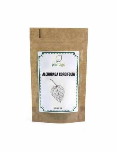 Alchornea cordifolia - liść