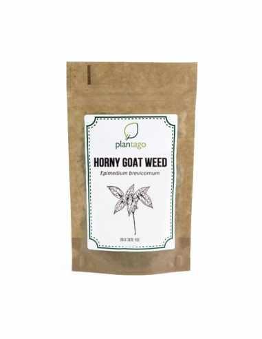 Horny Goat Weed ( Epimedium sagittatum )